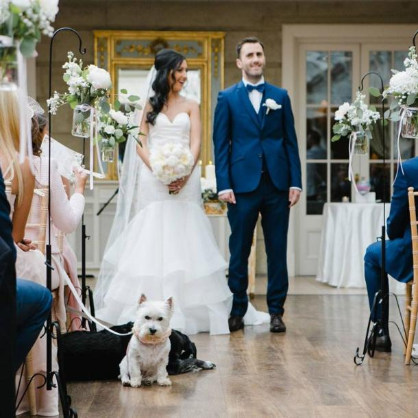 We pride ourselves on being one of Ireland's few dog friendly hotels, which includes allowing your dog be part of your Wedding Day at Tankardstown.